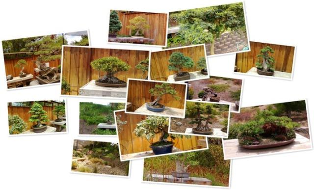 View Bonsai Garden at the San Diego Safari Park